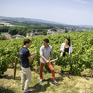 Full Day Private tour to Epernay's region